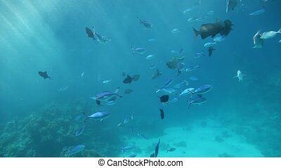 Fish swimming through sun beams - Variety of fish swimming...
