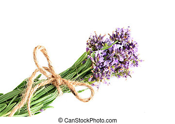 Lavender - Fresh lavender tied with string to dry out and...