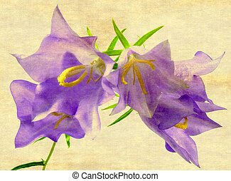 bellflower - a little blue bellflower with green and texture