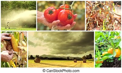country life and farming montage