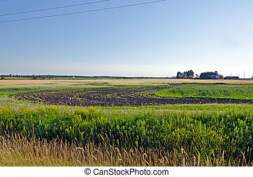 Farm field and green grass under blue sky