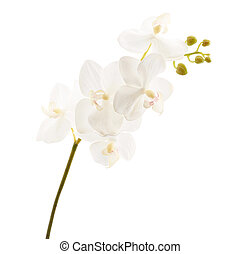 Artificial orchid flower isolated - Artificial white orchid...