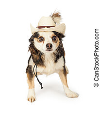 Chihuahua Cross in Cowboy Hat