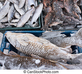 frozen fish - raw fish on a local market