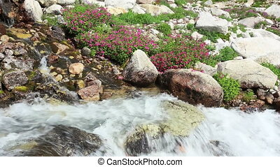 Stream and Wildflowers - Mountain stream and pink...