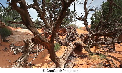 Dead tree in Arches National Park, Utah, USA