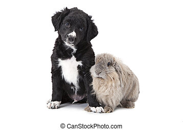 puppy and bunny in front of white background - Portrait of a...