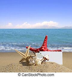 Conchas marinas, y, Estrellas de mar, con, blanco, tarjeta,...