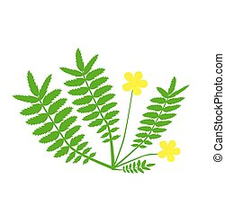 Plant with yellow flower. - Plant with yellow flower...