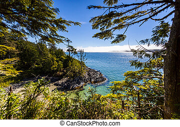 Scenic View to the Ocean from Within the Trees