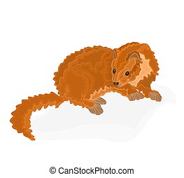 Young martens carnivorous animal vector illustration