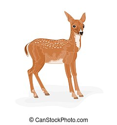 Roe Deer wild animal vector illustration