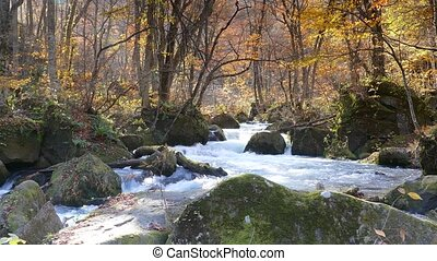 Oirase river at fall, Japan for adv or others purpose use