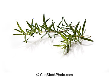 Rosemary - Two peaces of fresh rosemary