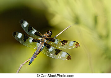 dragonfly is perching on the leaves
