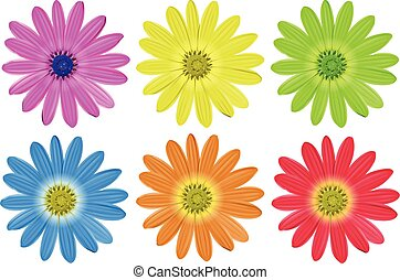 Colourful flowers on a white background