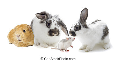 set of rodents on a white background isolated