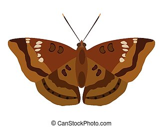 Moth - Vector illustration of moth isolated on white...