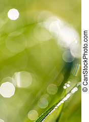 Defocused nature background with green grass - Blurred or...