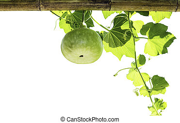bottle gourd isolated on white background