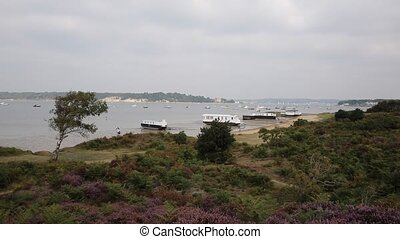English purple heather Poole uk - View to Brownsea Island...