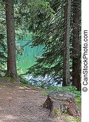 Vrbicke, pleso, -, tarn, en, bajo, Tatras, montañas,