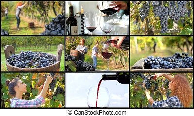 grape harvest montage - a collage including people...