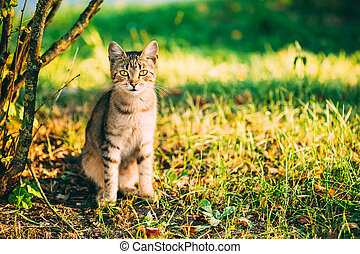 Cute Tabby Gray Cat Kitten Pussycat Sitting In Grass Outdoor...