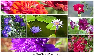 wonderful flowers collage - montage including flowers and a...