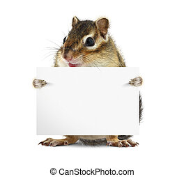 Funny chipmunk with banner