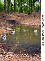 Forest pond - A small natural pond in a mixed forest,spring,...