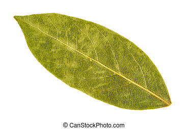 Bay leaf isolated