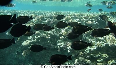 Underwater footage of sea life in tropical waters of Egypt,...