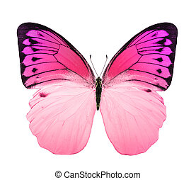 Tropical bright color butterfly
