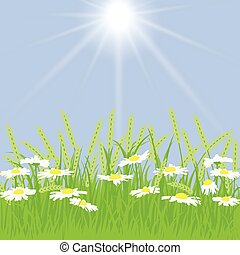 Spring card with grass, chamomile