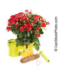 工具, 上水, 園藝, 罐頭, 玫瑰