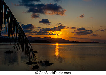 Palm leaves silhouette over sunset on Koh Samui Thailand -...