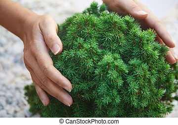 Environmental conservation - Human hands touching green...