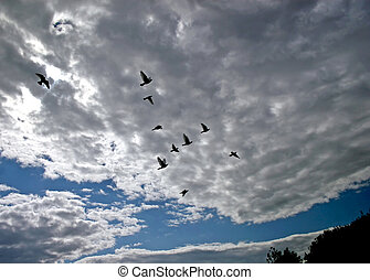 voando, Pássaros,