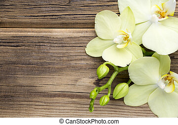 Orchid. - Orchid on a wooden surface. Studio photography.