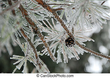 snow-covered fir tree with pinecone