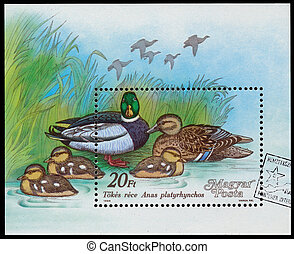 Stamp printed in Hungary shows Mallard