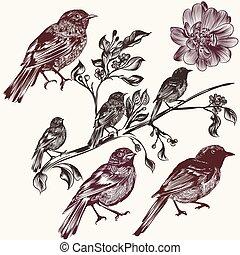 Detailed hand drawn birds set in vi