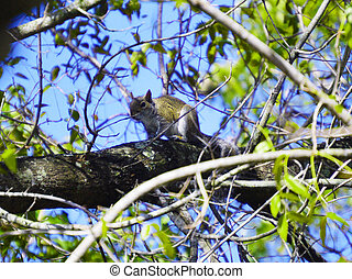 Squirrel on tree picture