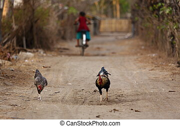 rooster street - life in the streets of gili trawangan