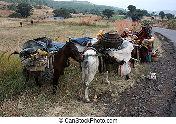 Nomadic Horses - Horses transporting the belonging of an...