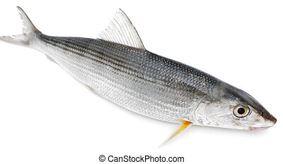 Fresh fish on a white background