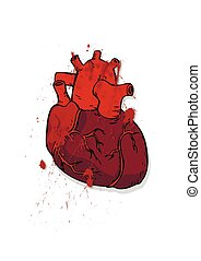 bleeding heart - The heart of man Prepared human heart...