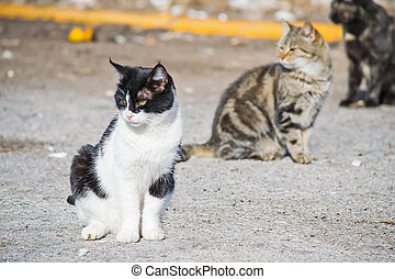 three wild cats on the edge of the road