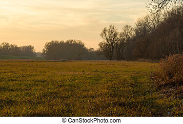 On the Edge of a Floodplain Forest Just After Sunset in...
